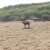 Fraisthorpe dog-friendly beach, Yorkshire - Dog walks in Yorkshire