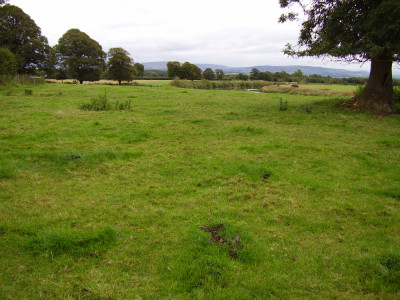 M6 Junction 44 dog walk through history, Cumbria - Driving with Dogs