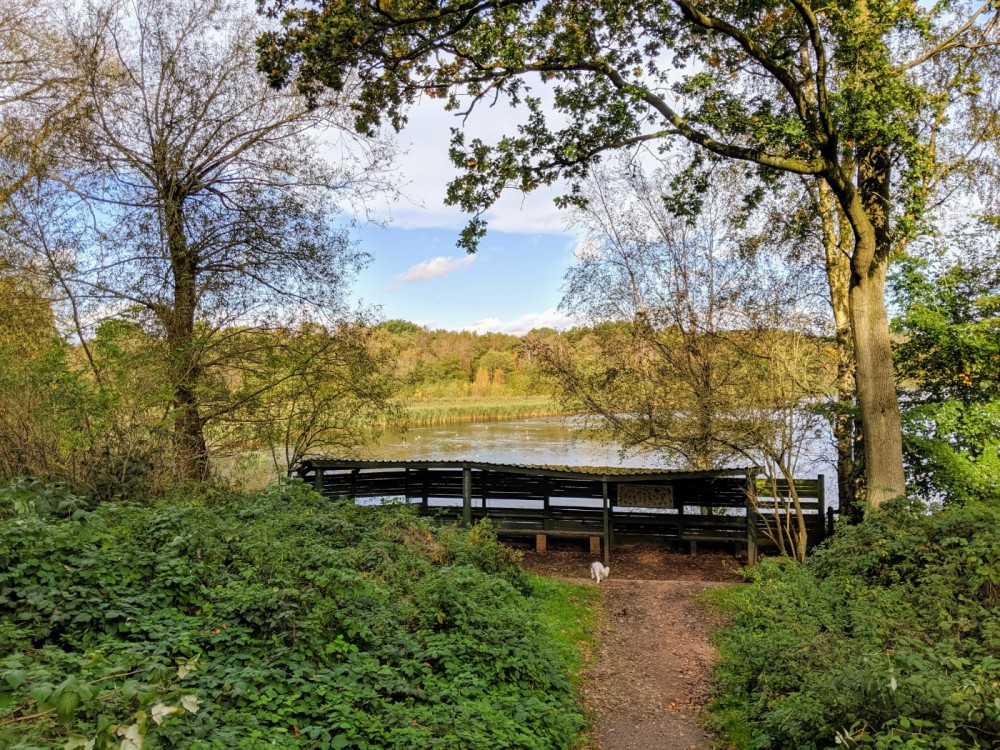 Marbury dog walks near Comberbach, Cheshire - IMG_20191012_133459.jpg