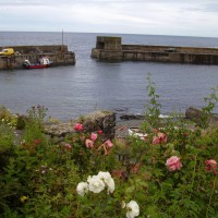 Craster dog-friendly beach and dog walk, Northumberland - Dog walk in Northumberland