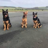 Castle Kennedy Airfield dog walk, Scotland - received_10160281531280472.jpeg