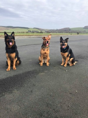Castle Kennedy Airfield dog walk, Scotland - Driving with Dogs