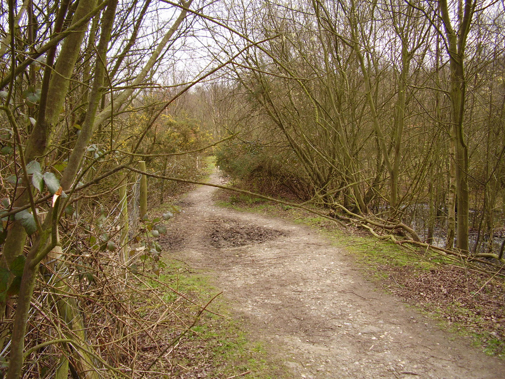 M2 Junction 1 Country park dog walk, Kent - Dog walks in Kent