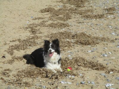 Caister-on-Sea dog-friendly North Beach, Norfolk - Driving with Dogs
