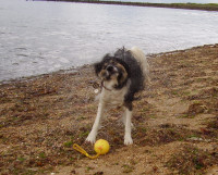Thurstaston Beach dog-friendly beach, Merseyside - Dog walks in Merseyside