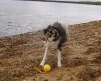 Thurstaston Beach dog-friendly beach, Merseyside - Dog walks in Merseyside