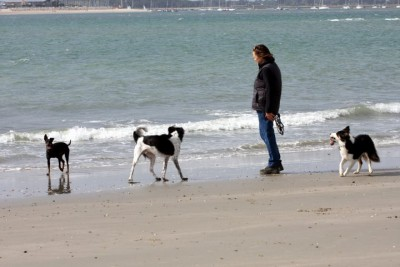 West Wittering dog-friendly beach, West Sussex - Driving with Dogs