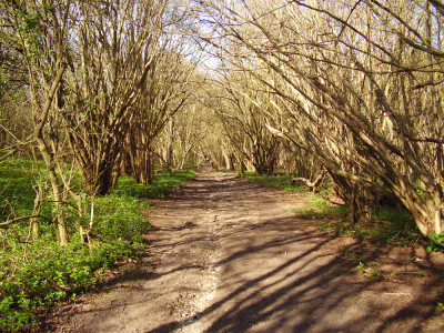 Bluebell Hill dog walk and dog-friendly pub, Kent - Driving with Dogs