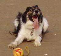 Seaton Carew dog-friendly beach, County Durham - Dog walks in County Durham