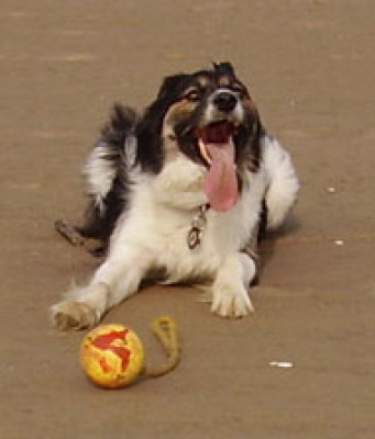 Seaton Carew dog-friendly beach, County Durham - Driving with Dogs