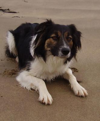 Barricane dog-friendly beach, Devon - Driving with Dogs