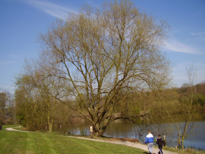 Country park dog walk and cafe, Kent - Driving with Dogs