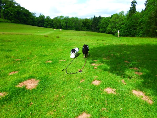 Dogs on lead, Brockhampton park