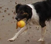 Musselburgh dog-friendly beach, Scotland - Dog walks in Scotland
