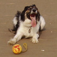 Dog-friendly beach and dog walk near Bude, Cornwall - jem