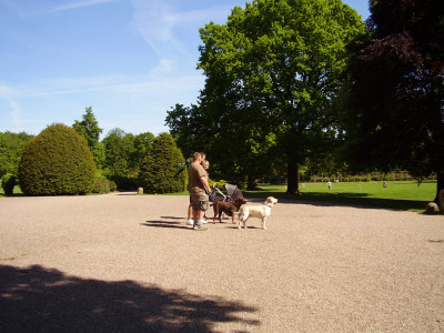 Rufford Country Park dog walk, Nottinghamshire - Driving with Dogs