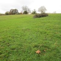 A329 dog walk near Pangbourne, Berkshire - Berkshire dog walk
