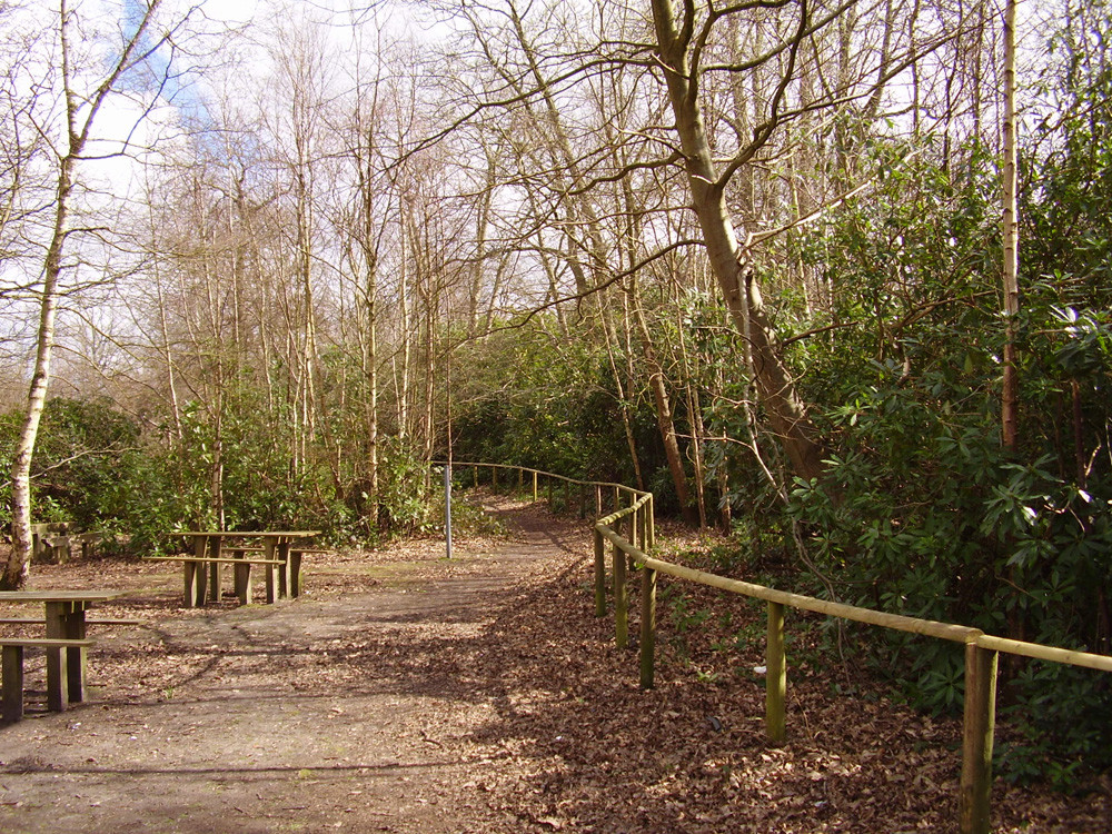 Selling dog-friendly pub and woodland dog walk, Kent - Dog walks in Kent