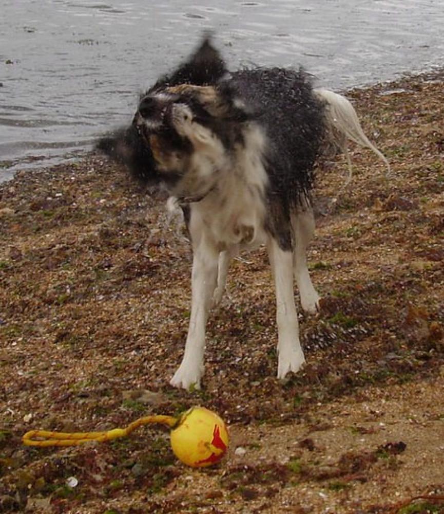 Prestonpans dog-friendly beach near Edinburgh, Scotland - Dog walks in Scotland