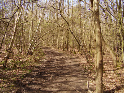 Dargate woodland dog walk and gastro-pub, Kent - Driving with Dogs