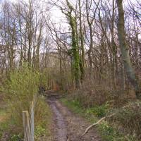 M2 Junction 7 woodland dog walk and pub, Kent - Dog walks in Kent