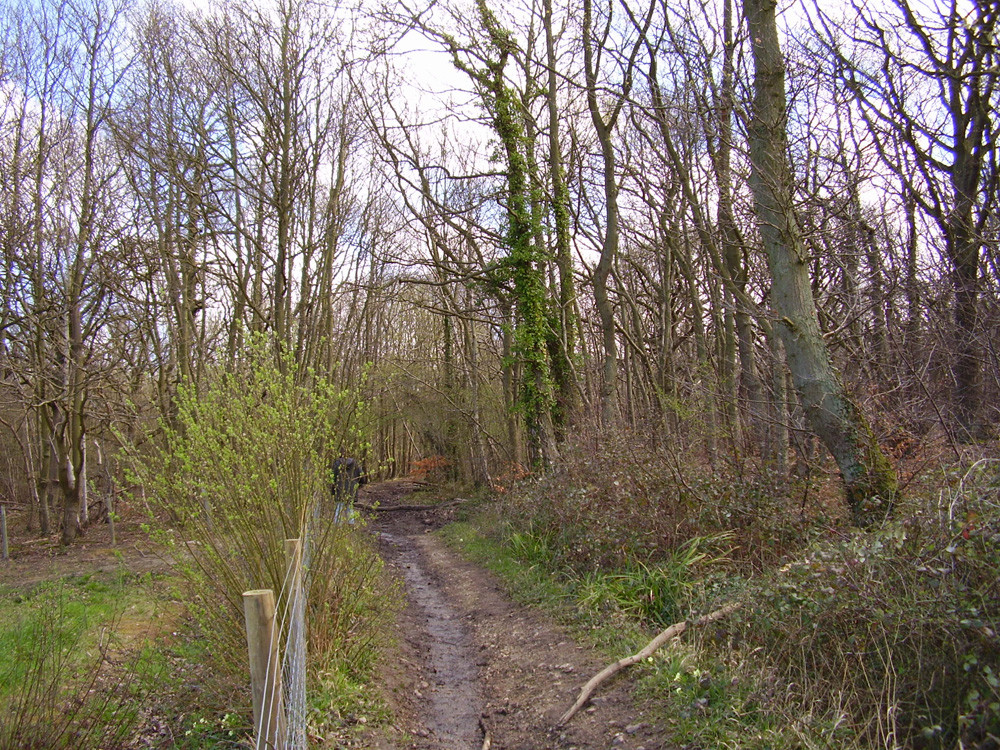 M2 Junction 7 woodland dog walk and pub, Kent - Dog walks in Kent