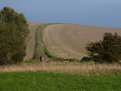 A29 dog walk on the South Downs, West Sussex - Driving with Dogs