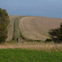 A29 dog walk on the South Downs, West Sussex - Sussex dog walk