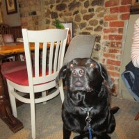 A287 dog-friendly pub with a dog walk near Rushmore, Surrey - Surrey dog-friendly pub with dog walk.JPG
