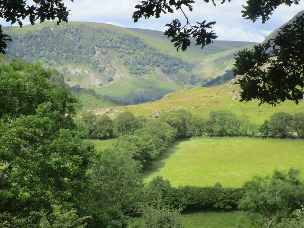 Best walks for dogs in Wales