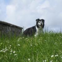 A377 coaching inn and dog walk, Devon - Devon dog walk and dog-friendly pub.JPG