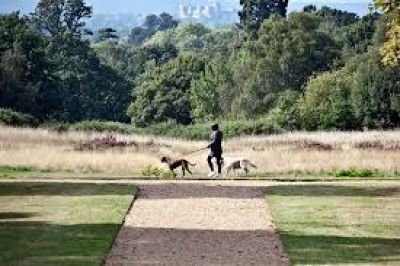 Langley Park dog walks, Buckinghamshire - Driving with Dogs