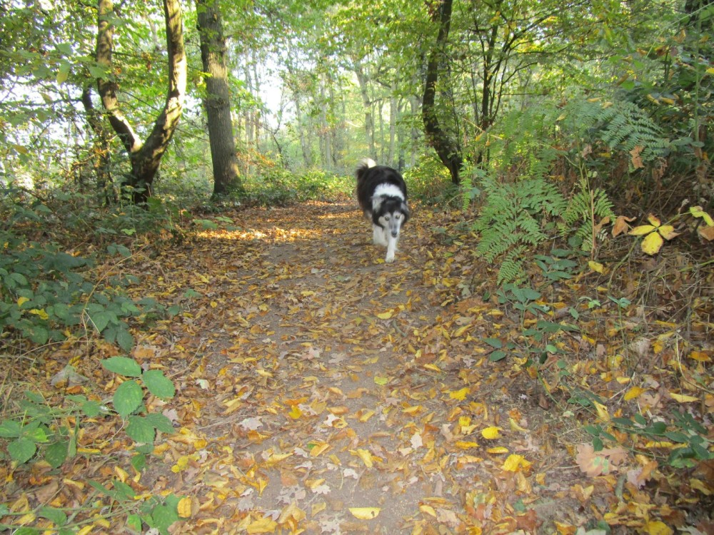 Big Woodland dog walk, Kent - Kent dog-friendly pubs with dog walks