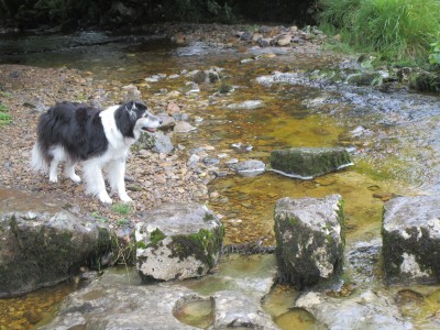 Wensleydale dog-friendly pub and dog walk, Yorkshire - Driving with Dogs