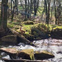 Golitha Falls National Nature Reserve, Cornwall - 20210427_155933.jpg