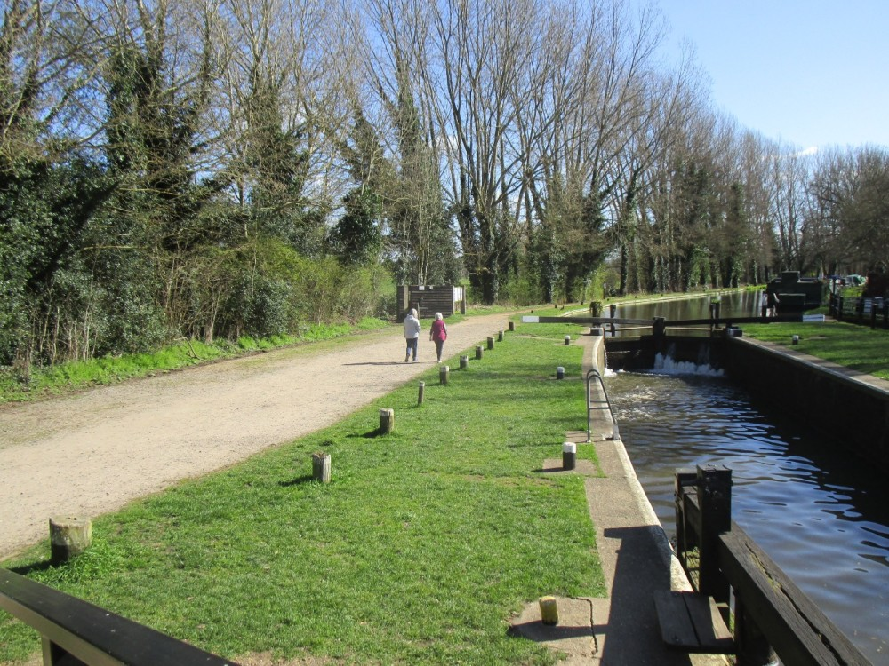 A3 dog-friendly dining pub and dog walk, Surrey - Surrey dog walks and dog-friendly pubs.JPG