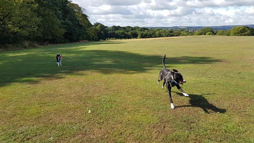 Sheffield dogwalking - Graves Park, Yorkshire - 40020450_10155362305411330_3713983973198659584_n.jpg