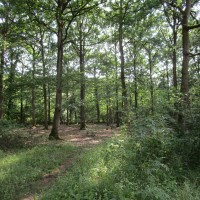 Woodland dog walk near two dog-friendly pubs, Northamptonshire - Dog walk and dog-friendly pub Northamptonshire