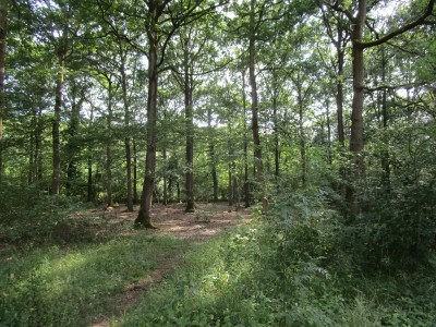 Woodland dog walk near two dog-friendly pubs, Northamptonshire - Driving with Dogs