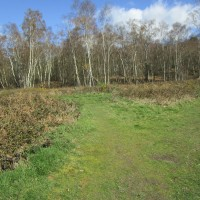 A25 woodland dog walk near Abinger Hammer, Surrey - Surrey dog-friendly pubs and dog walks.JPG