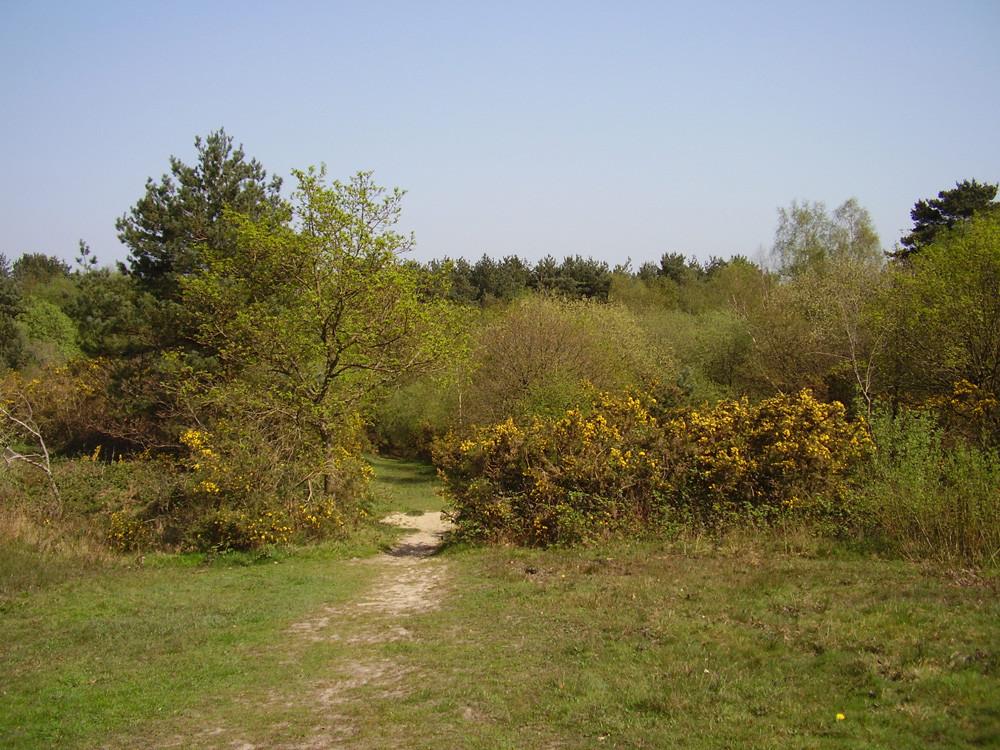 M3 Junction 3 dog walk and refreshments, Surrey - Dog walks in Surrey