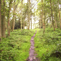 M3 Junction 5 dog walk and pub, Hampshire - Dog walks in Hampshire
