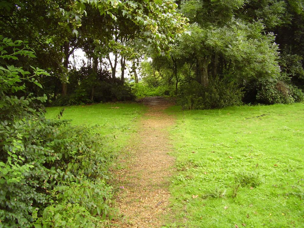 M3 Junction 6 dog-friendly pub and dog walk, Hampshire - Dog walks in Hampshire