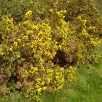 Sulham Hill dog walk, Berkshire - Dog walks in Berkshire