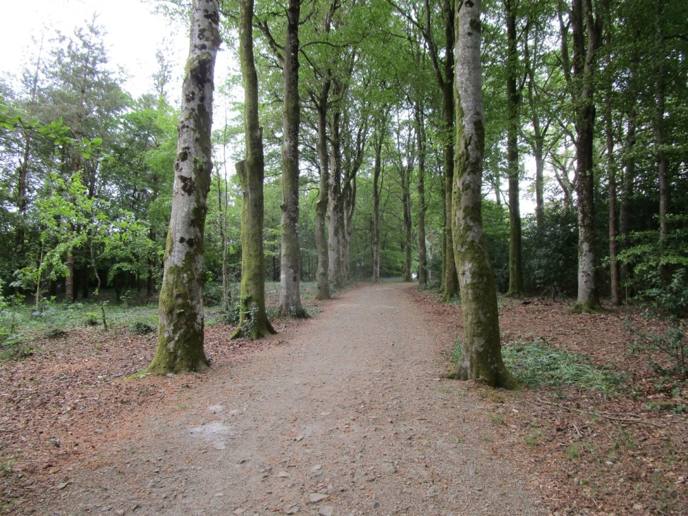 A382 Woodland dog walk, gardens and cream tea, Devon - Devon dog walking places.JPG