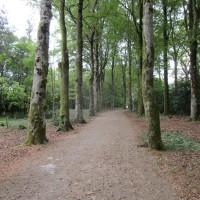 A382 Woodland dog walk, gardens and cream tea, Devon - Devon dog walking places.JPG