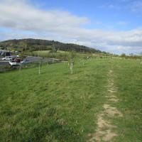 M5 Services Gloucester, Gloucestershire - Dog walks in Gloucestershire