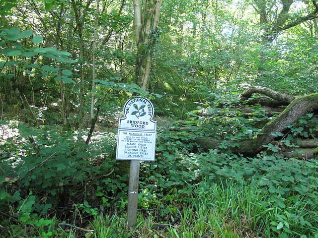 Woodland dog walk on the edge of Dartmoor, Devon - Devon dog walk