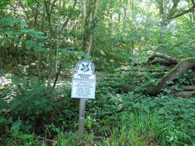 Woodland dog walk on the edge of Dartmoor, Devon - Driving with Dogs