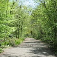 A404 dog walk near Rickmansworth, Hertfordshire - Hertfordshire dog walking places.jpg